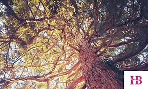 HB Accountants Carbon Positive Business Programme - plant a tree